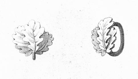 Abb. 6: Reproduktion aus der Preußischen Ordensliste 1817, Eichenlaub mit einfachem Durchzugsring