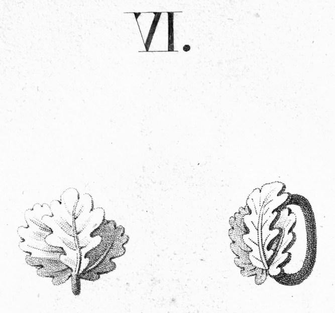 Abb. 10: Abbildung eines Eichenlaubs aus der Ordensliste des Jahres 1817.